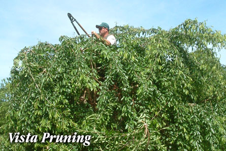 vista pruning in Osterville, MA