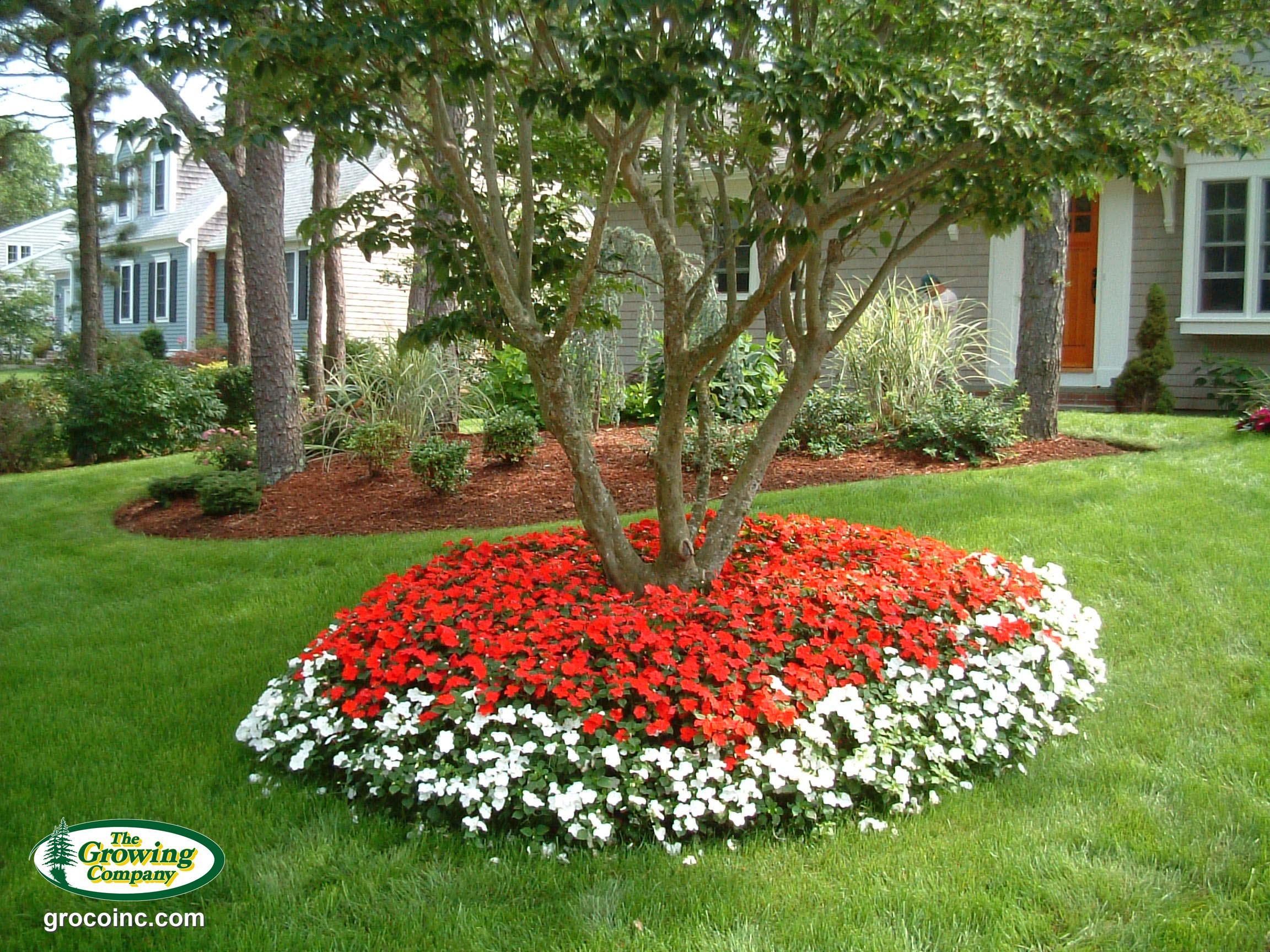 Beautiful Images Of Flower Beds Around Trees Top Collection Of Different Types Of Flowers In The Images Hd