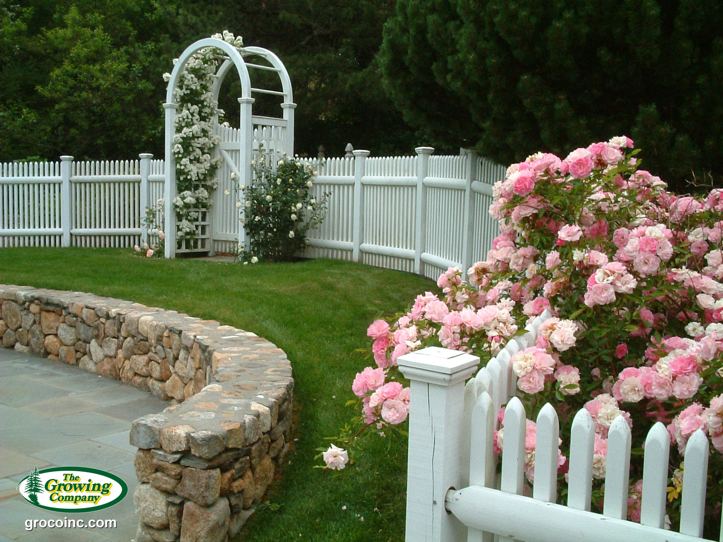 Perennial flower bed design for cotuit osterville chatham orleans roses in chatham ma mightylinksfo Image collections
